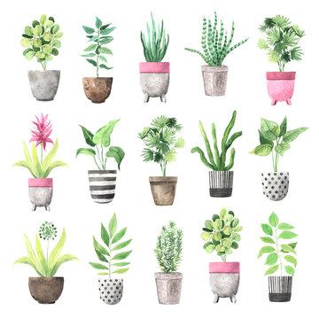 Watercolor  house green plants in flower pots