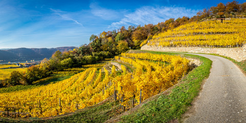 Canvas Prints Honey Panorama of a vinyard with terraces and Wachau valley near Dürnstein, Austria