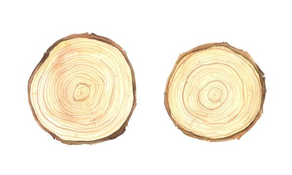 Watercolor wooden slice