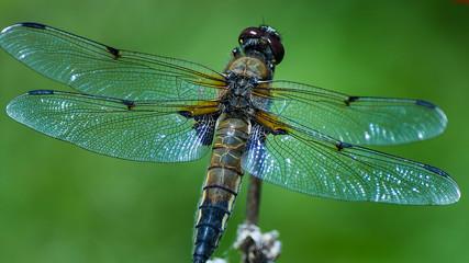 dragonfly on leaf