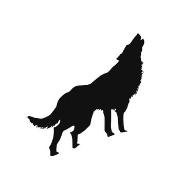 silhouette of a howling wolf or a dog barking, Stock Vector illustration isolated on white background.