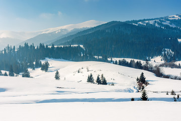 mountainous countryside in wintertime. beautiful rural landscape on a bright sunny day. spruce forest on snow covered rolling hills. wonderful scenery of borzhava ridge