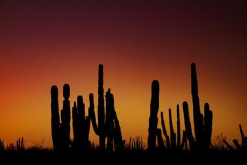 Photo sur Plexiglas Bordeaux Sunrise at mexican desert