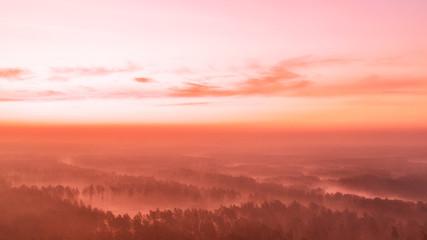 Türaufkleber Koralle Pink dawn pine over forest drone view