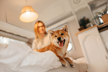 happy shiba inu dog and owner posing on a bed indoors