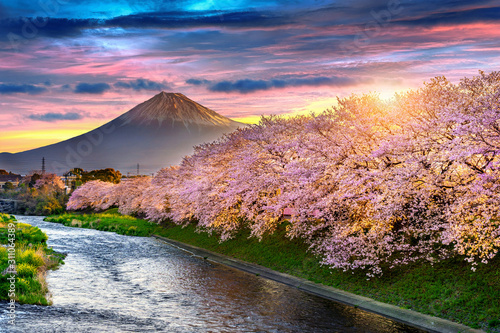 Wall mural Cherry blossoms and Fuji mountain in spring at sunrise, Shizuoka in Japan.