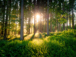 Image of beautiful forest with sunlight and fairy tale mood