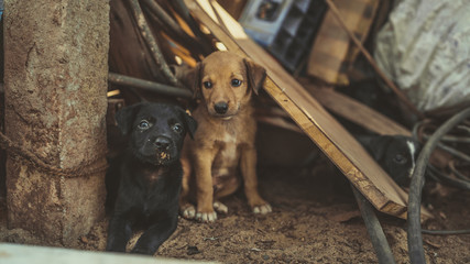 The homeless little puppies in a junkyard.