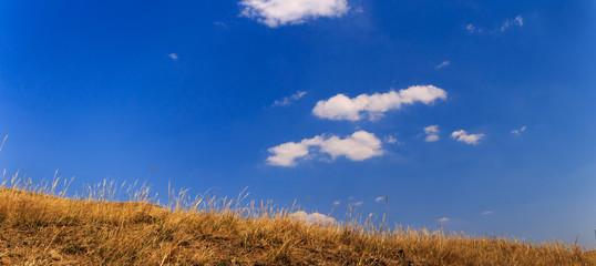 Foto auf Leinwand Dunkelblau panoramic view of grass and blue sky