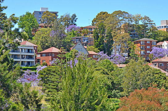 Typical historical Australian building with flowering jacaranda tree at the foreground