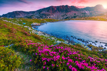 Wall Mural - Pink rhododendron flowers and Bucura lake at sunset, Retezat mountains