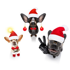 Foto op Plexiglas Crazy dog group team row of dogs on christmas holidays