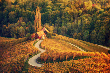 Poster de jardin Automne Heart shaped wine road in Slovenia