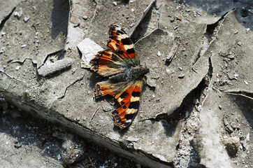 dead butterfly on the windowsill of an abandoned house