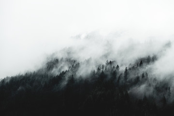 Foto op Canvas Grijze traf. Moody forest landscape with fog and mist