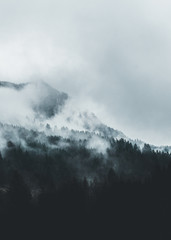 Moody forest landscape with fog and mist