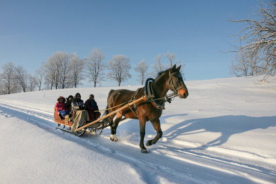 brown horse pulling sleigh with peoples, winter wounderland landscape
