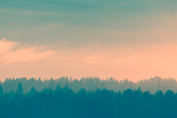 Foggy pine forest for background Fototapete