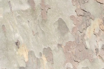 Fotobehang Oude vuile getextureerde muur bark of tree texture