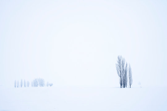 view of winter landscape, snow covered field and deciduous trees.