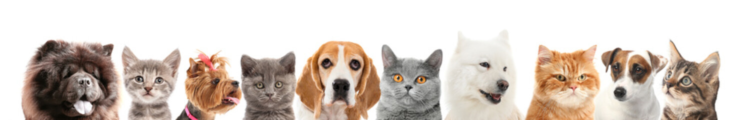 Set of different dogs and cats on white background