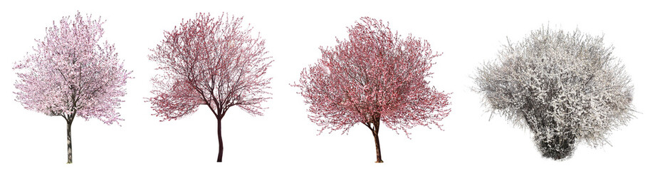 Photo sur Aluminium Arbre Collage with beautiful blossoming trees on white background
