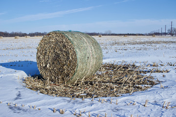 Fototapeta Sunny winter landscape view of round corn stalk bales setting in a snow covered field, with blue sky background