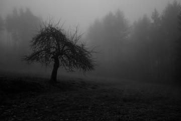Foto auf Acrylglas Dunkelgrau Foggy Forest
