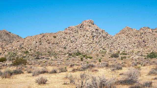 View in the desert of Joshua tree, california