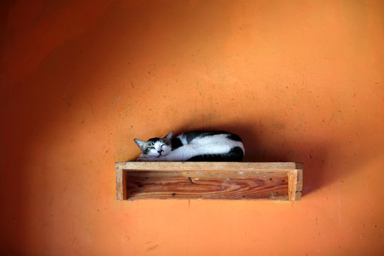 """A cat lays on a wooden shelf at a cat shelter called """"Rumah Kucing Parung"""" in Bogor"""