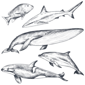 Vector collection of hand drawn ocean and sea animals in sketch style isolated on white.