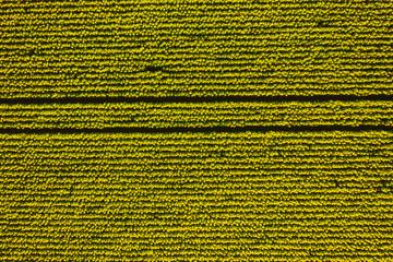 壁紙(ウォールミューラル) - Bright yellow sunflower field in sunlight. Textural image of drone photography.