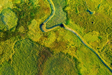 Wall Mural - Marvelous view of winding river in green field. Lush wetlands of bird's eye view.