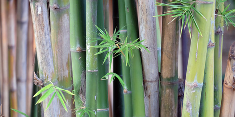 Spoed Fotobehang Bamboo bamboo in the forest with relexing background