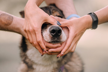 owners holding hands around the dog nose, close up