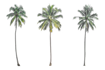 Foto op Canvas Palm boom Coconut palm tree isolated on white background.