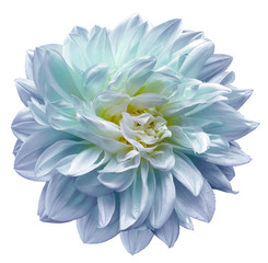 Fotobehang Dahlia purple-blue-turquoise flower dahlia on white isolated background with clipping path. Closeup. For design. Nature.