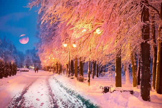 Snowy park in Europe