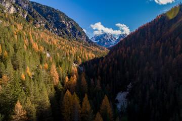 In de dag Diepbruine Aerial view of a forest in Italian Alps / During autumn season