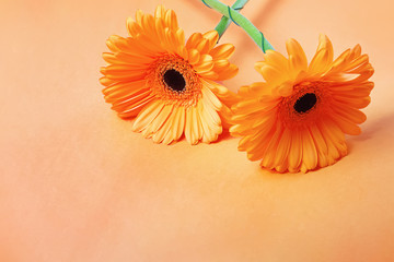 Autocollant pour porte Gerbera Two gerbera flowes on pastel orange background