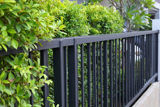 black steel iron fence of boundary house with green leaf of shrub tree growing wall natural in garden