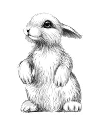 Rabbit. Sketch, artistic, graphic image of a rabbit on a white background. Wall sticker.