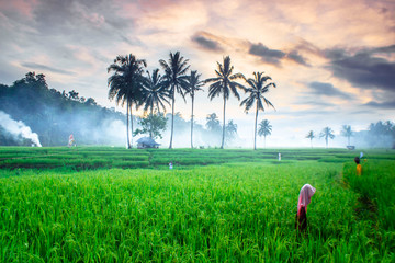 Foto auf Acrylglas Grun Indonesian natural beauty when the morning with the atmosphere of farmers who will go to the rice fields