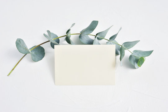 Mock up of Eucalyptus leaves and paper clip with place for text on white background. Wreath made of eucalyptus branch. Flat lay, top view