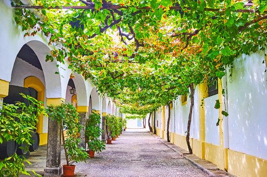 The shady yard of the winery, Jerez, Spain