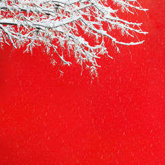 View of a snowy tree branch against the background of a red wall of a building during a snowfall. Concept landscape, postcard, christmas, advertising, sale.