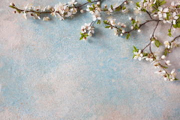 Spring background with flowering cherry plum branches