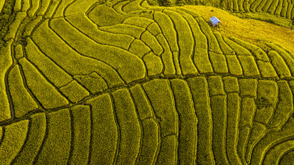 Garden Poster Rice fields Rice terrace fields or Ladder rice field in aerial view at Pabongpeang , Maejam Village , Chaingmai Province of Thailand