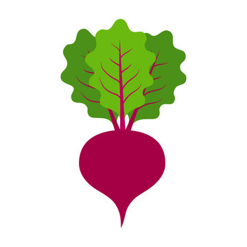 Beet or beets beetroot vegetable or radish with leaves flat vector color icon for apps and websites