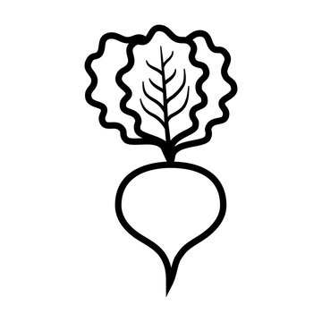 Beet or beets beetroot vegetable / radish with leaves line art vector icon for apps and websites
